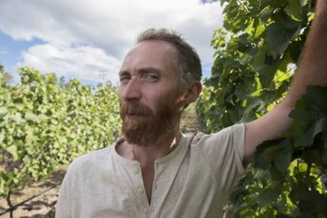Vincent van Gogh lookalike Daniel Baker in the Pinot Noir vineyard at Martin's Lane Winery in the Okanagan Valley, British Columbia. (CNW Group/VMF Estates)