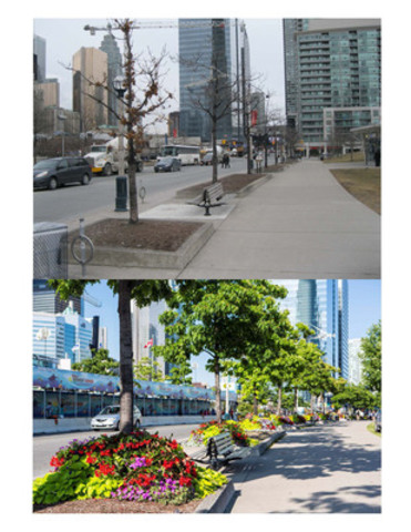Before and After Shot of Flowers on Bremner Blvd 2013. (CNW Group/Toronto Entertainment District Business Improvement Area)