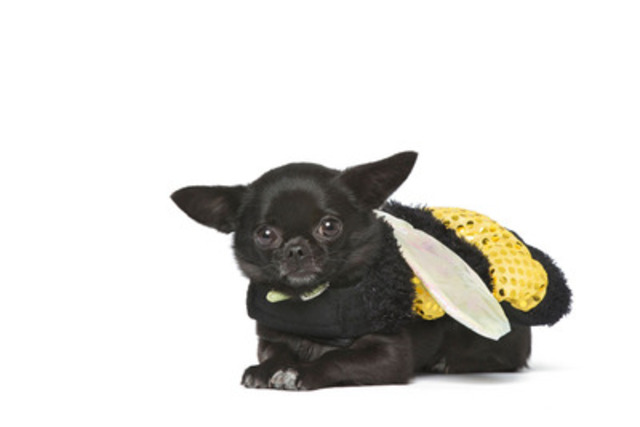 JOSIE - the bumblebee - WHY WE LOVE THIS COSTUME: Josie is black, so she is already hard to see. But, this cute little insect has LED lights in the wings increasing her visibility. (CNW Group/Toronto Hydro Corporation)