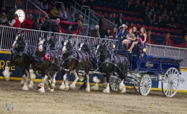 Fourth place in the $25,000 Royal Six-Horse Draft Championship and the win in the $2,500 Clydesdale Six-Horse Hitch went to the Express Clydesdales of Yukon, OK. Photo by Ben Radvanyi Photography (CNW Group/Royal Agricultural Winter Fair)