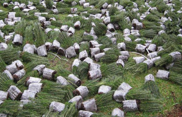 La décongélation des semis avant la plantation (Groupe CNW/Staples Advantage Canada)