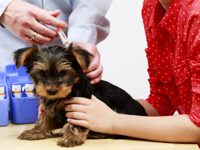 Vaccination is your pet's best defense against disease. When you consider what treating a serious illness can cost you and your beloved pet in terms of both money and distress, prevention through vaccination is the best option. (CNW Group/Canadian Animal Health Institute)