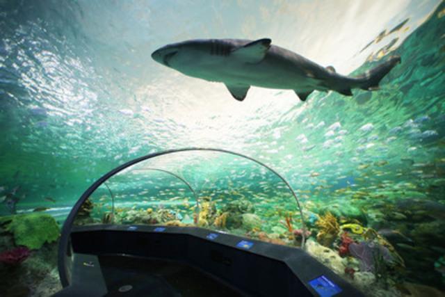 """Ripley's Aquarium of Canada's thrilling """"Dangerous Lagoon"""" is a 2.9 million litre underwater adventure filled with sharks, green sea turtles, sawfish, and more, and features a 315 ft-long (97 metre) underwater tunnel with a moving sidewalk. (CNW Group/Ripley's Aquarium of Canada LP)"""