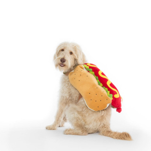ALFIE - the hot dog - WHY WE LOVE THIS COSTUME: This costume doesn't cover Alfie's eyes, and it's a lighter colour to help others see him better. More treats for him! (CNW Group/Toronto Hydro Corporation)