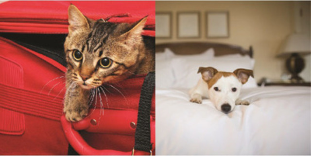 Dogs win as the preferred seatmates but cats triumph as hotel room neighbours (CNW Group/Hotels.com)
