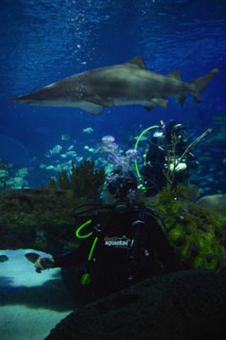 Dive into Ripley's Aquarium of Canada (CNW Group/Ripley's Aquarium of Canada)