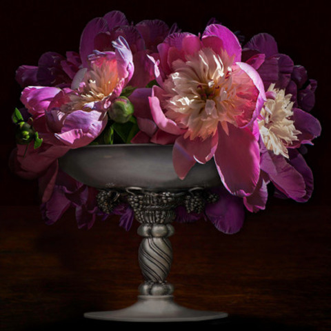"Artist Elaine Waisglass' ""The Beauty of Life"" exhibition opens this week at First Canadian Place Gallery. Paeonia 'Bowl of Beauty' is one of 12 limited edition, archival quality pigment prints on display until June 20, by appointment only. Waisglass is part of First Canadian Place's Lunchtime Talk Series on Thursday, May 1. (CNW Group/Elaine Waisglass, Wychwood Park Productions)"