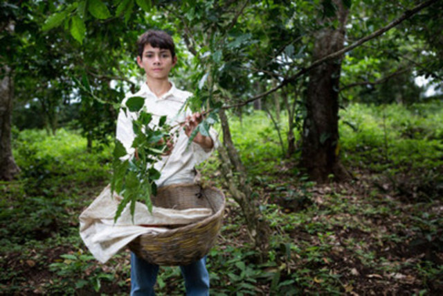 A child coffee picker in El Salvador. (CNW Group/World Vision Canada)