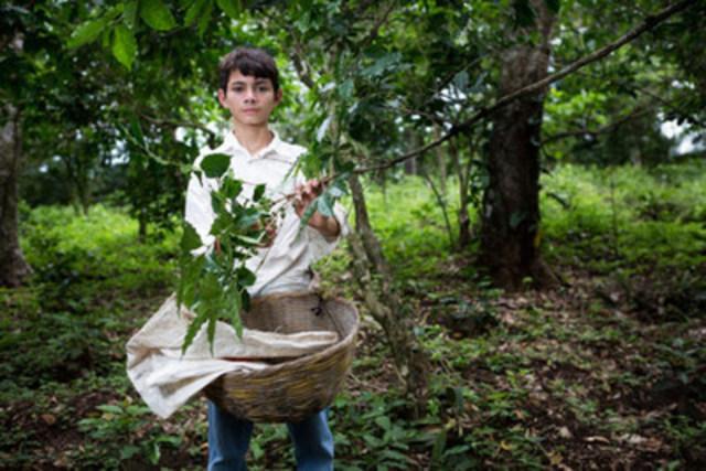 A child coffee picker in El Salvador. (CNW Group/World Vision Canada)